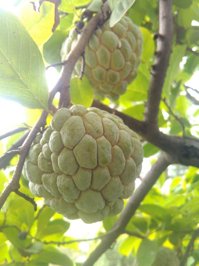 Fruit doux photographie stock libre de droits