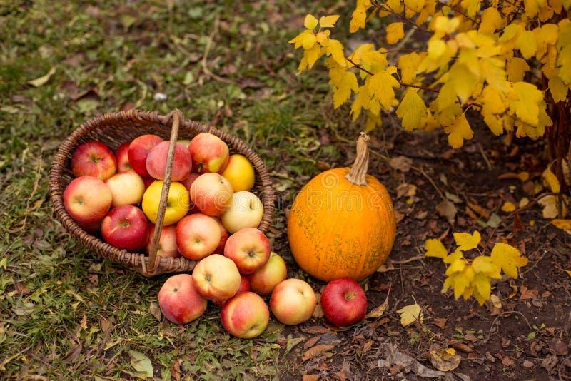 Fruit en groente in tuin stock foto's