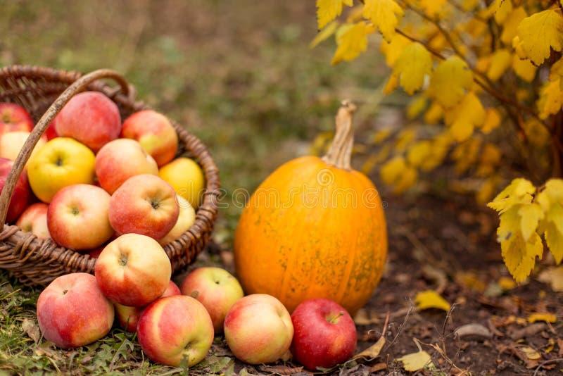 Fruit en groente in tuin stock afbeeldingen
