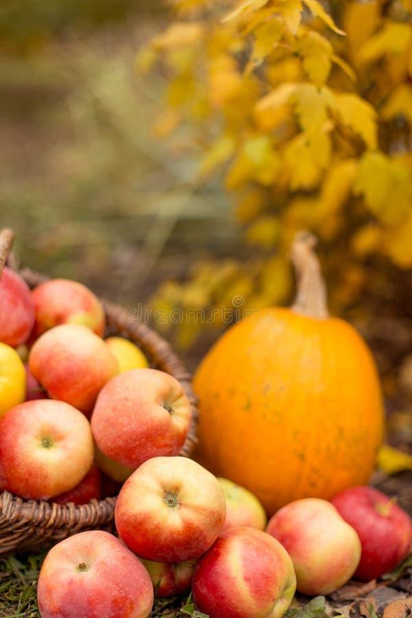 Fruit en groente in tuin stock fotografie