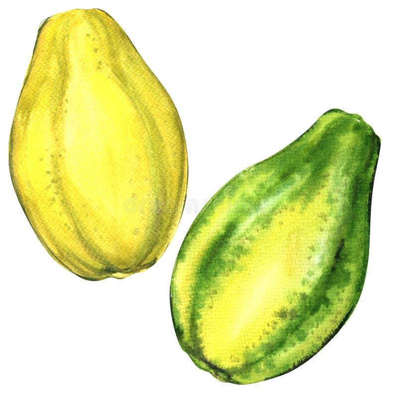 Fruit entier de papaye, deux objets d'isolement, illustration d'aquarelle sur le blanc illustration stock