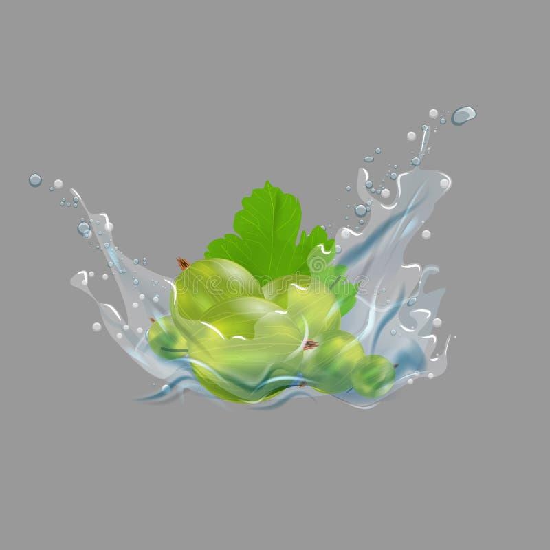 Fruit et feuille de groseille à maquereau dans l'éclaboussure de l'eau Conception de label de jus ou de confiture illustration du illustration de vecteur