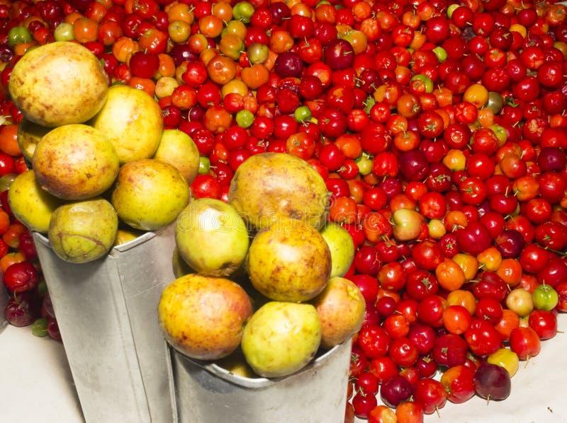Fruit et Mangaba d'Acerola images libres de droits