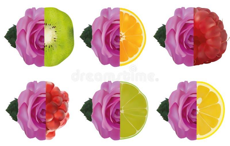 Fruit et rose pourpre Chaux, citron, grenade, framboise, kiwi, orange avec la rose illustration du vecteur 3d Portez des fruits a illustration de vecteur