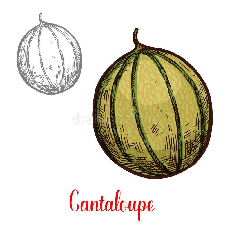 Fruit exotique frais de cantaloup illustration libre de droits