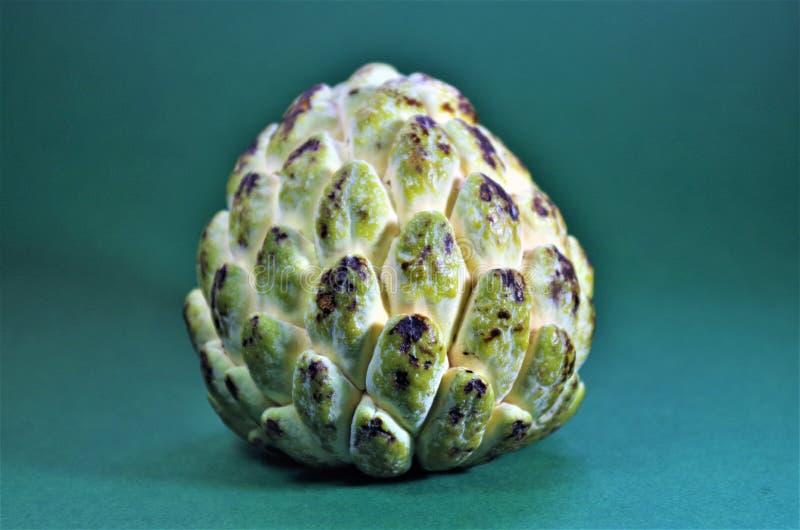Fruit exotique vert du Honduras d'Annona photos libres de droits