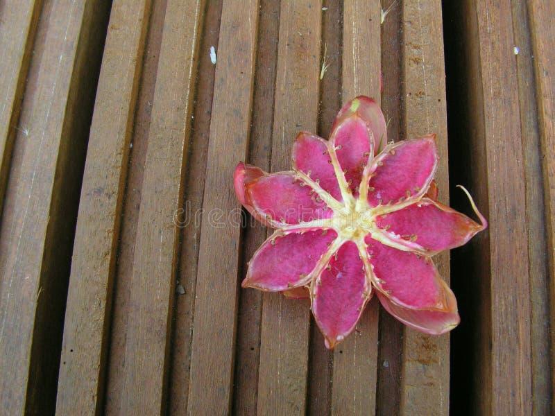 Download Fruit flower on wood stock photo. Image of fruit, flower - 734836