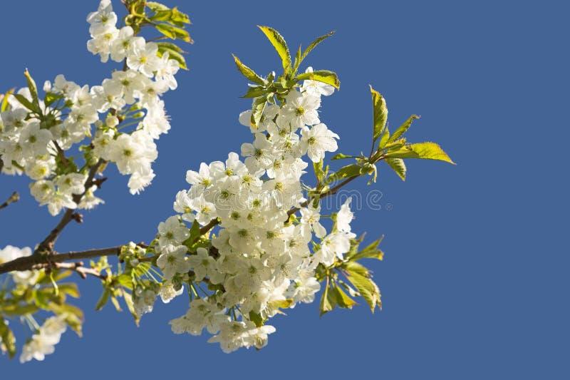 Fruit flowers stock photos