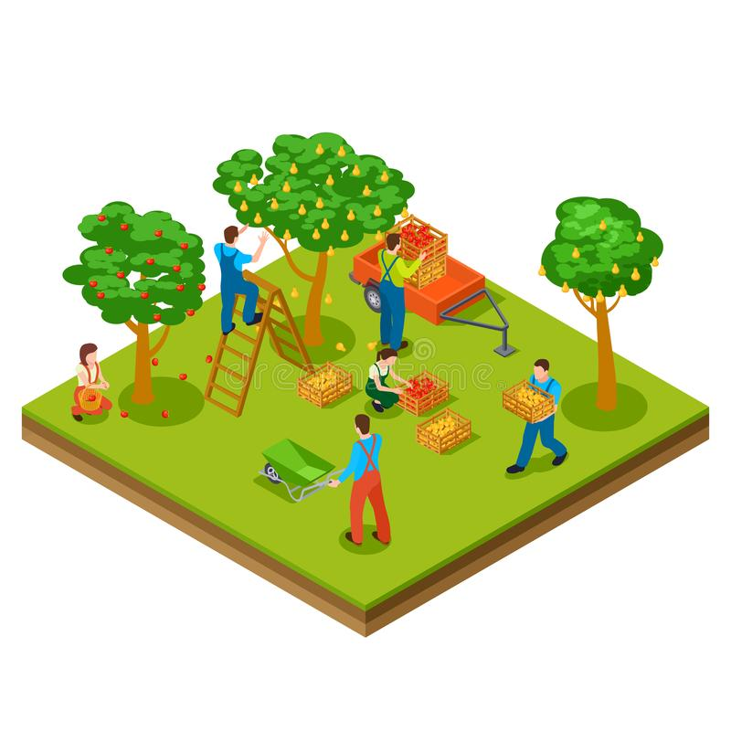 Fruit garden, harvesting, gardening isometric vector concept royalty free illustration