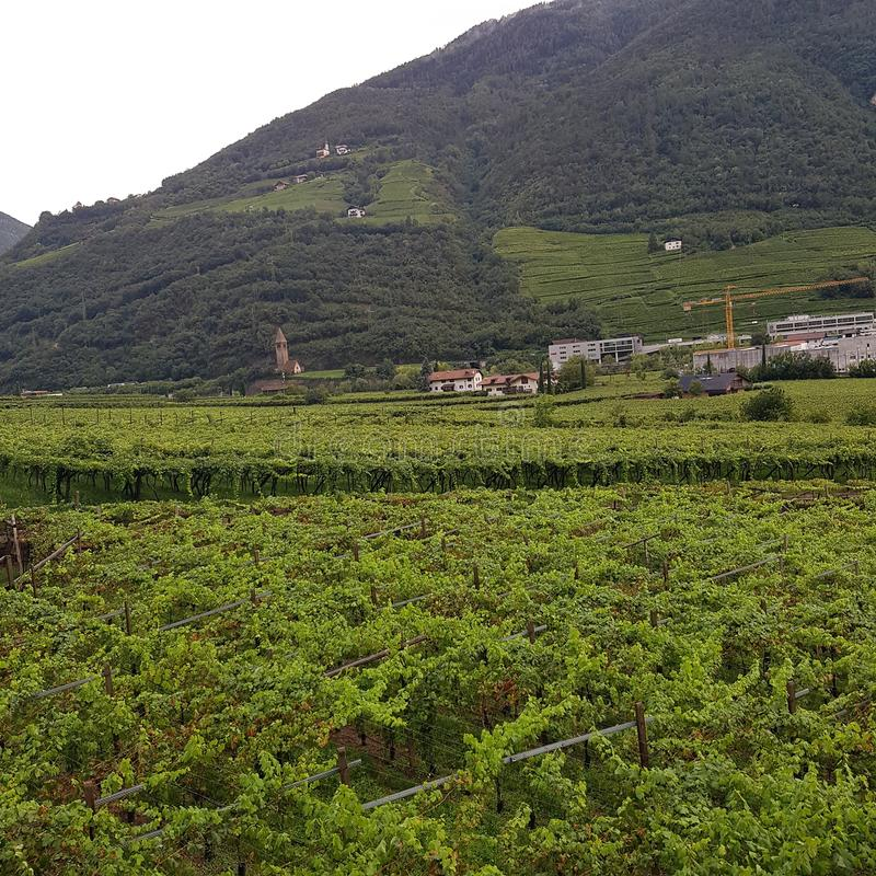 Fruit growing area in Bolzano in Summer 2017 stock images
