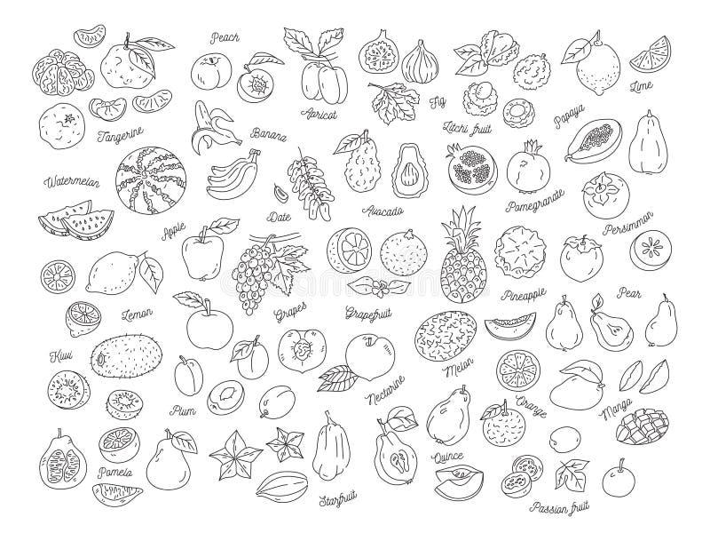 Fruit icon, Hand-drawn set of fruits. Vector illustration royalty free illustration