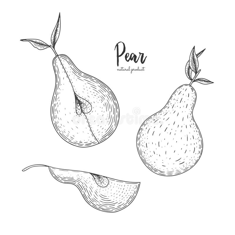 Fruit illustration with pear in the style of engraving. Detailed vegetarian food. Hand drawn elements for menu, greeting royalty free illustration