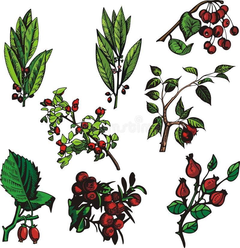 Fruit illustration series