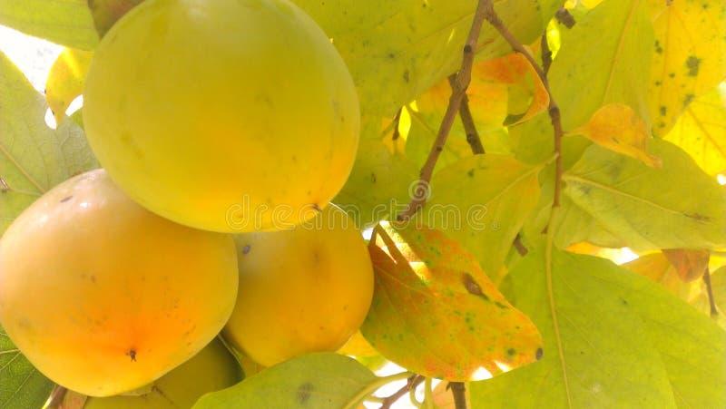 Fruit jaune avec la feuille rouge verte image stock