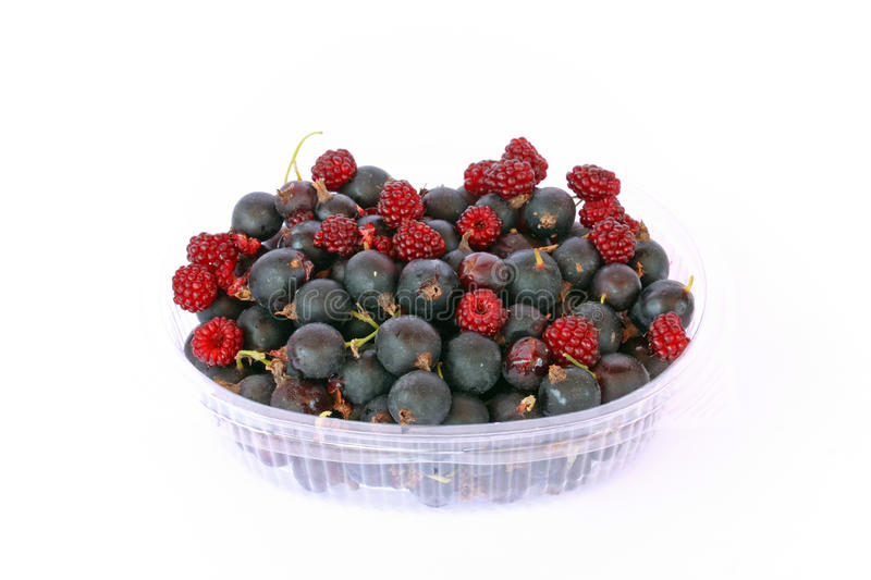 Fruit of Jostaberry. New Hybrid Between Black Currant and Gooseberry stock photography
