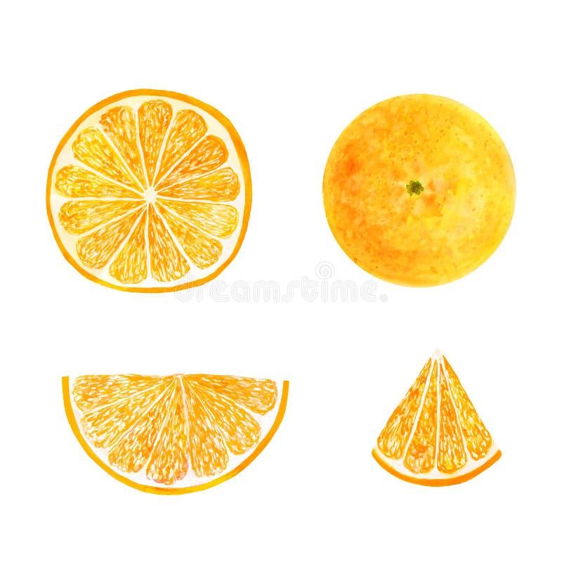 Fruit juteux figé d'orange d'aquarelle et tranche orange d'isolement sur le fond blanc Conception peinte à la main d'illustration images stock