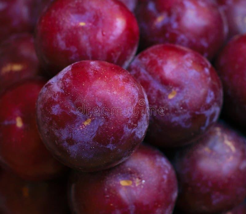 Fruit mûr et arbre-frais prêt pour l'expédition ou consommation images stock
