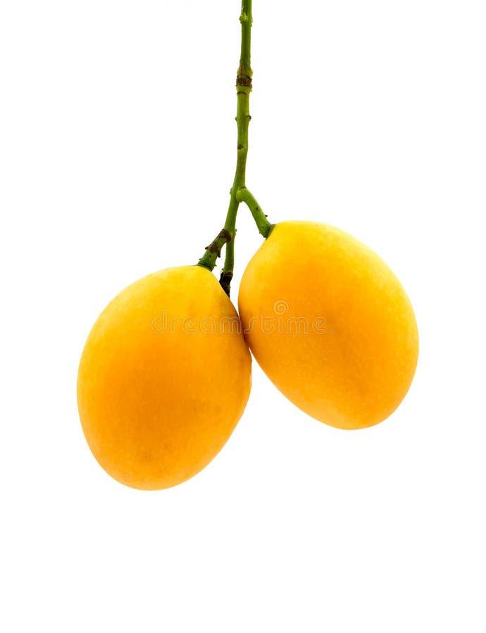 Fruit marial de prune d'isolement sur le fond blanc photo libre de droits