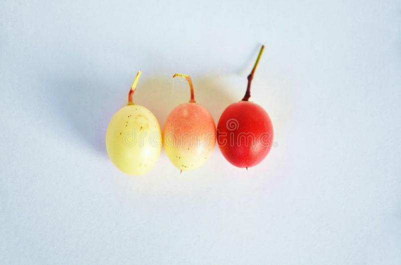 A fruit named Carissa Carandas with three colors. stock images