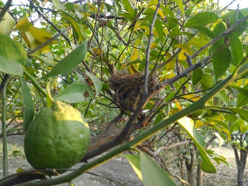 Fruit & Nest royalty-vrije stock afbeelding