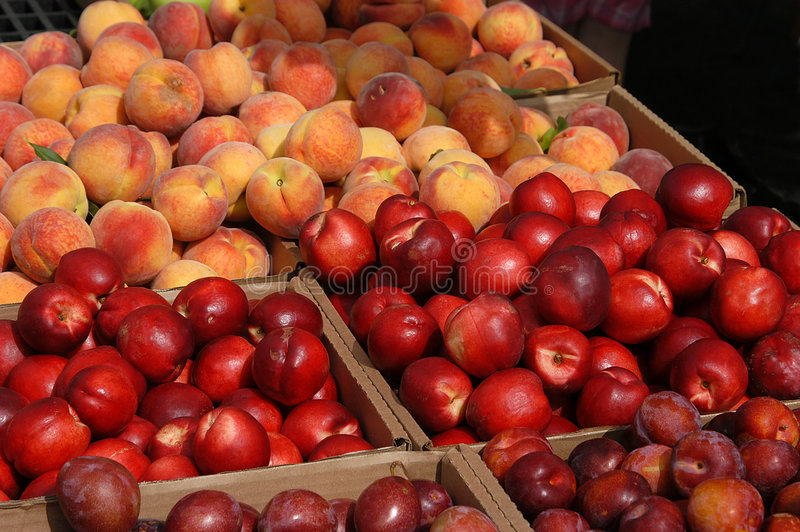 Fruit No3 stock images