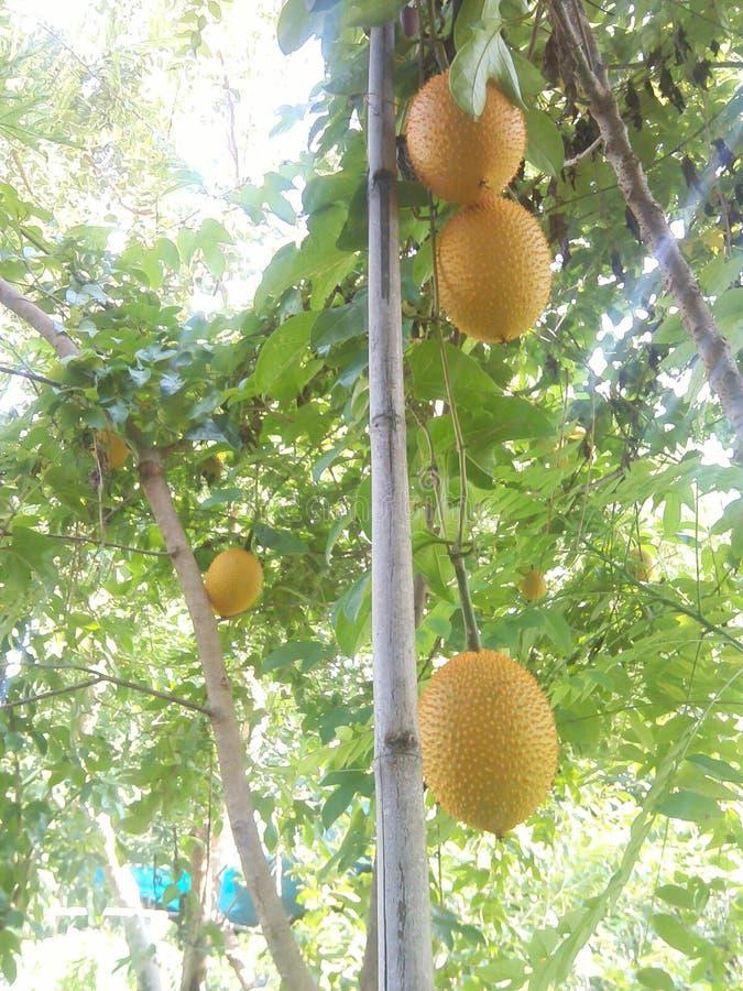 Fruit op boom stock foto's