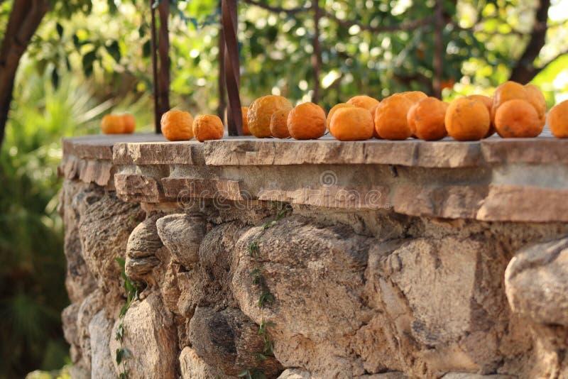 Fruit op een Richel royalty-vrije stock afbeeldingen