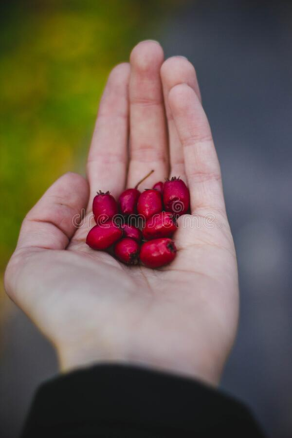 Fruit in open hand royalty free stock images