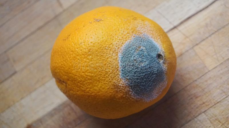 Fruit orange endommagé photo stock