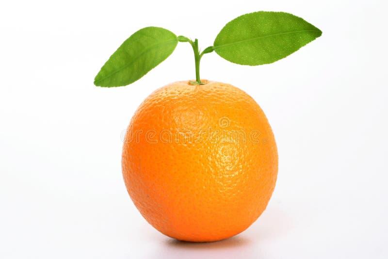 Fruit orange frais images libres de droits