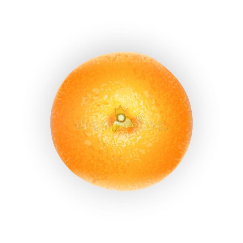 Fruit orange pour le jus frais agrume 3d mûr orange réaliste i illustration stock