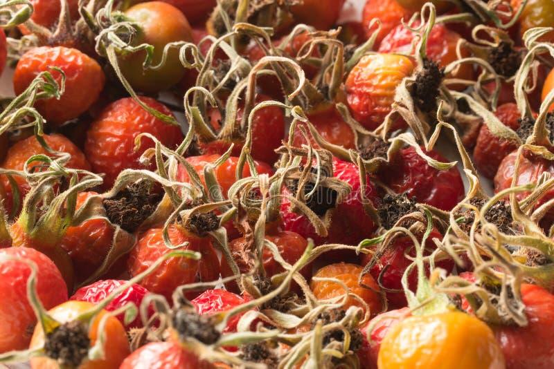 Fruit orange sec de cynorrhodon de baie photo libre de droits