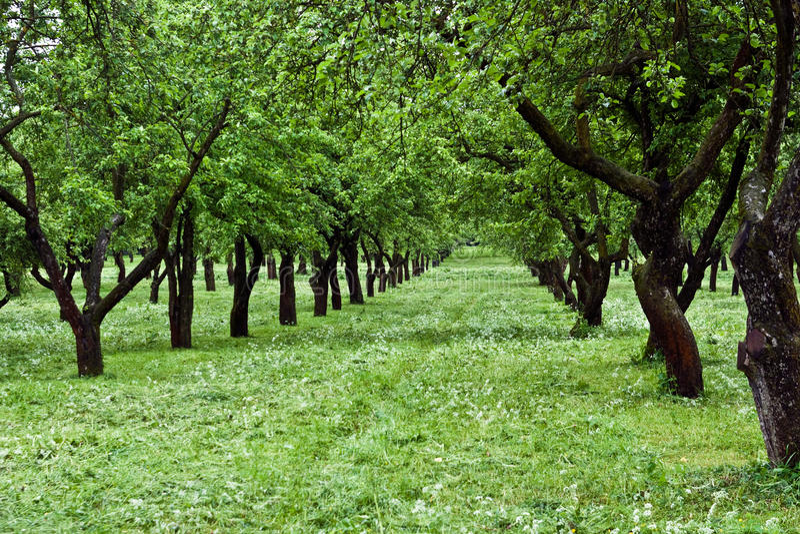 Fruit orchard royalty free stock photos