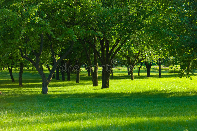 Download Fruit orchard stock image. Image of meadows, scene, apple - 5593709