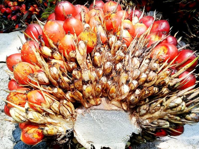 Fruit palm. Single, closeup, vibrant stock photos