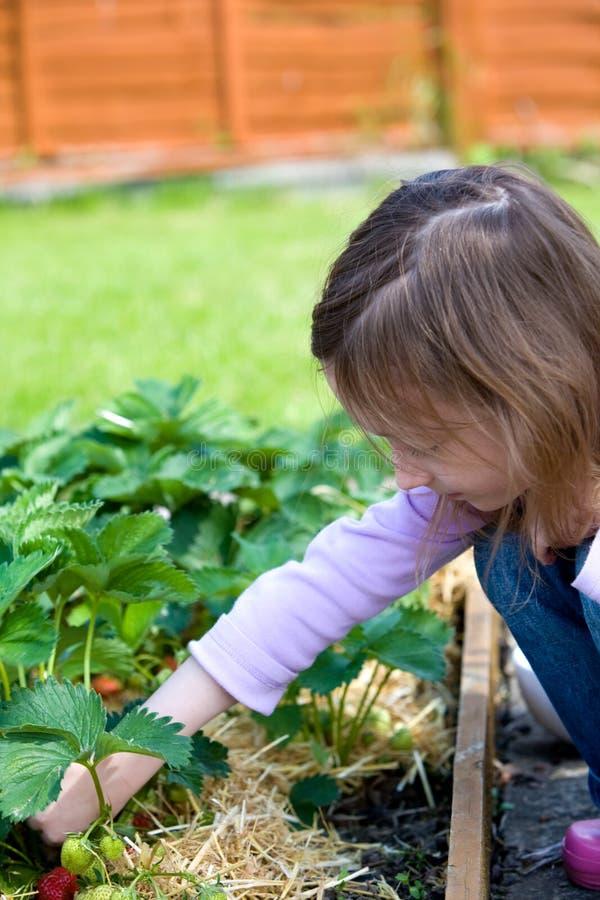Download Fruit Picking stock image. Image of garden, child, picking - 5858855