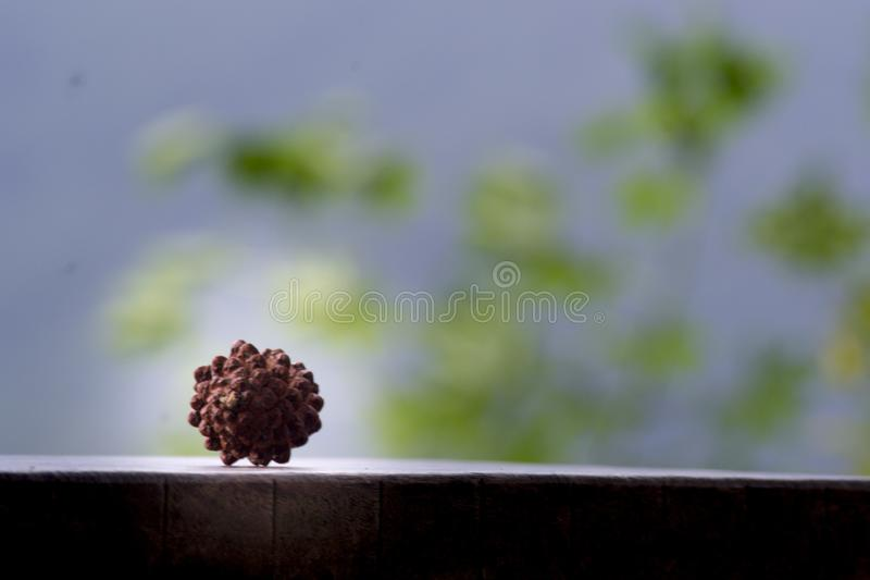 KEBUMEN - The Fruit of The Pine Tree is Layered Like in This Photo royalty free stock photos