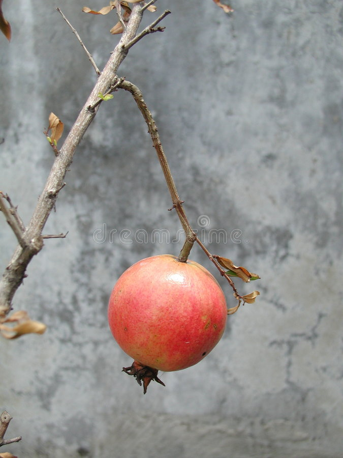 Fruit - Pomegranate stock photos
