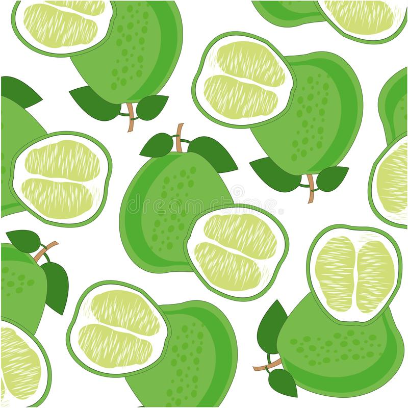 Fruit pomelo pattern on white background is insulated. Vector illustration of the exotic ripe fruit pomelo royalty free illustration