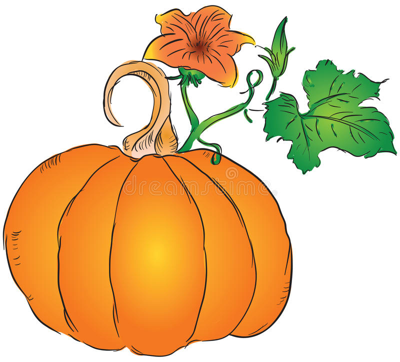 Download Fruit of the pumpkin stock vector. Image of agriculture - 27122238