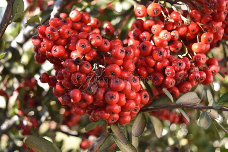 Fruit red macro stock photography