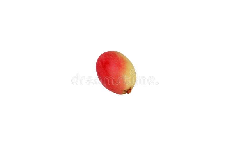 Fruit rouge de karonda d'isolement photo libre de droits