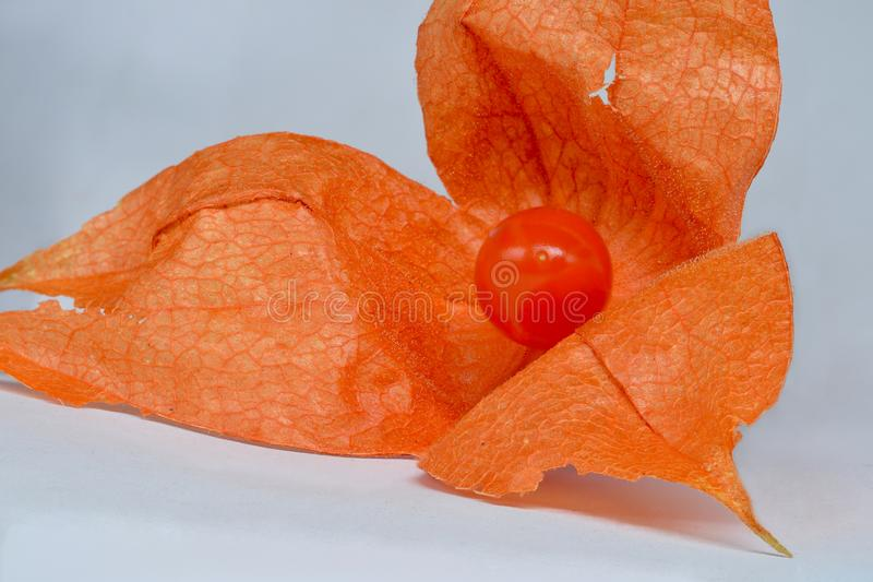 Fruit rouge de physalis image stock