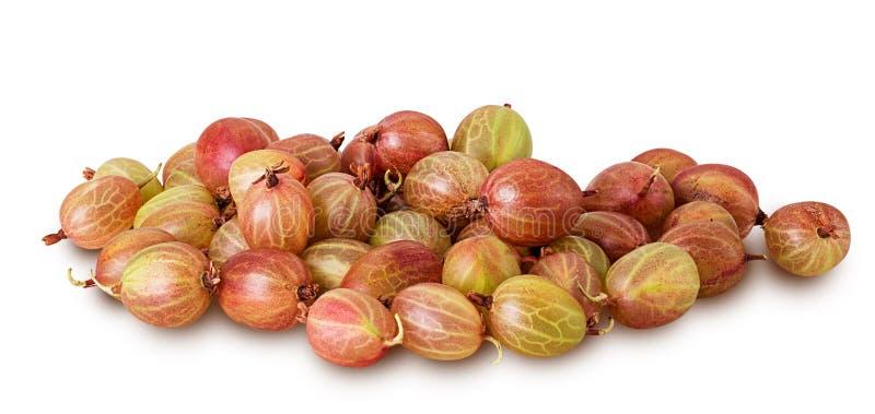 Fruit rouge et vert de pile de groseille à maquereau image stock