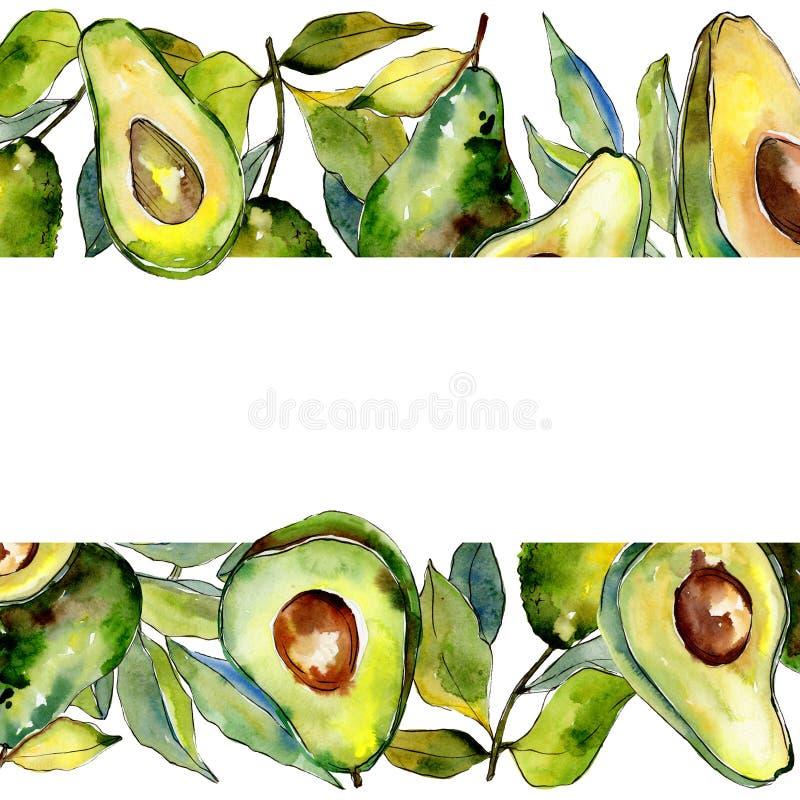 Fruit sauvage d'avocat vert exotique dans un cadre de style d'aquarelle illustration de vecteur