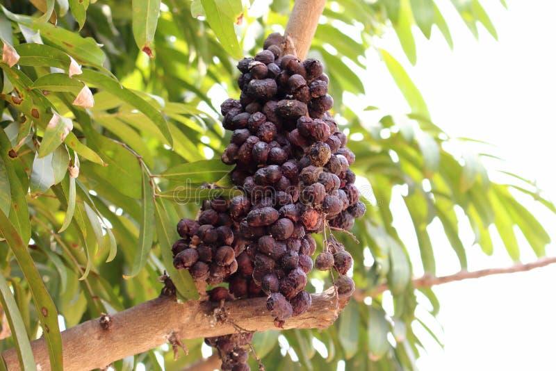 Fruit sec photos stock