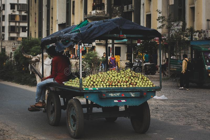 Fruit seller on a bullock cart in India stock images