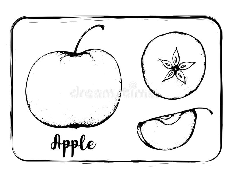 Fruit sketch black and white fruit sketch hand drawing isolated stock photo