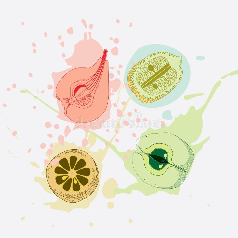 Fruit in splashes