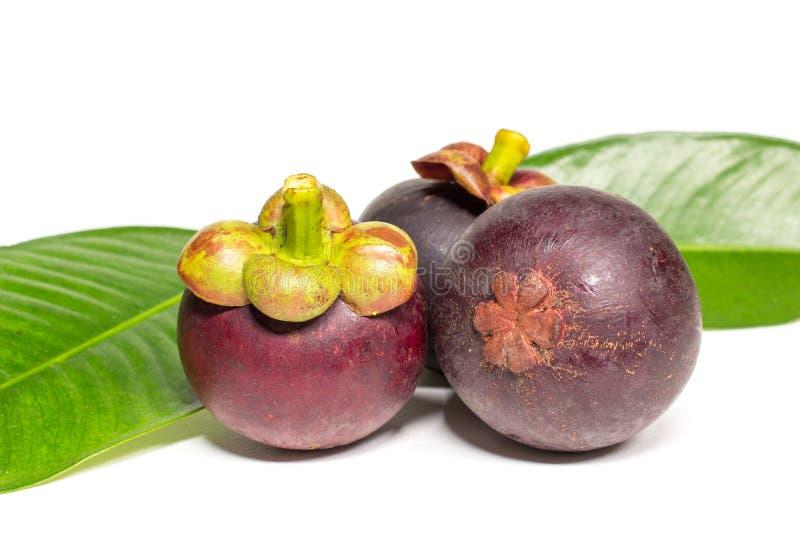 Fruit thaïlandais de mangoustan frais d'isolement sur le fond blanc image libre de droits